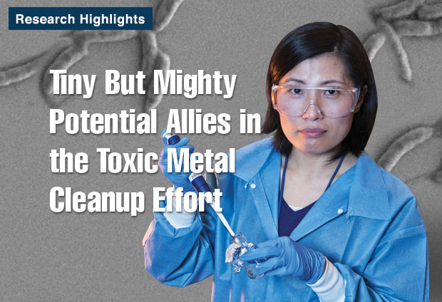 Article title: Tiny But Mighty Potential Allies in the Toxic Metal Cleanup Effort; photo of Yongqin Jiao.