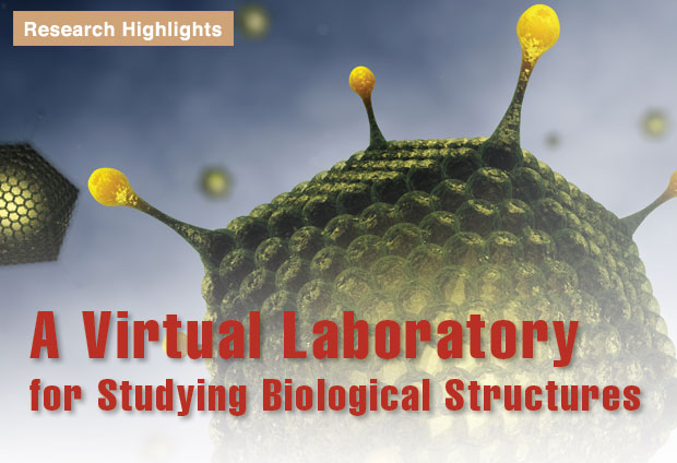 Article title: A Virtual Laboratory for Studying Biological Structures