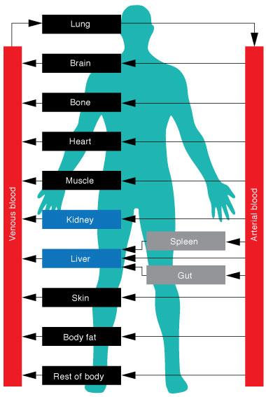 Ciprofloxacin and alcohol consumption
