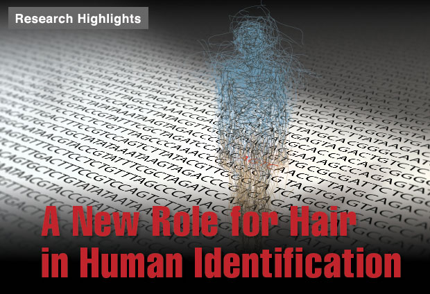 Article title: A New Role for Hair in Human Identification