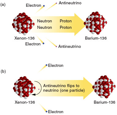 (a) In the double beta decay process, two neutrons simultaneously convert to two protons, emitting two electrons and two electron antineutrinos that share the energy generated from the decay. (b) During neutrinoless double beta decay, the nucleus would emit only electrons, which carry the full energy of the decay, because the antineutrinos would have been reabsorbed as neutrinos.