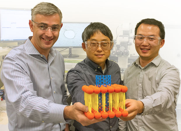 LLNL scientists (from left to right) Aleksandr Noy, Kyunghoon Kim, and Jia Geng hold up a model of a carbon nanotube that can be inserted into live cells, an achievement with potentially revolutionary applications in medicine and other fields. (Photograph by Julie Russell.)